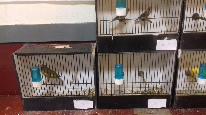 bourses d'oiseaux a flemalle - Page 2 20161176