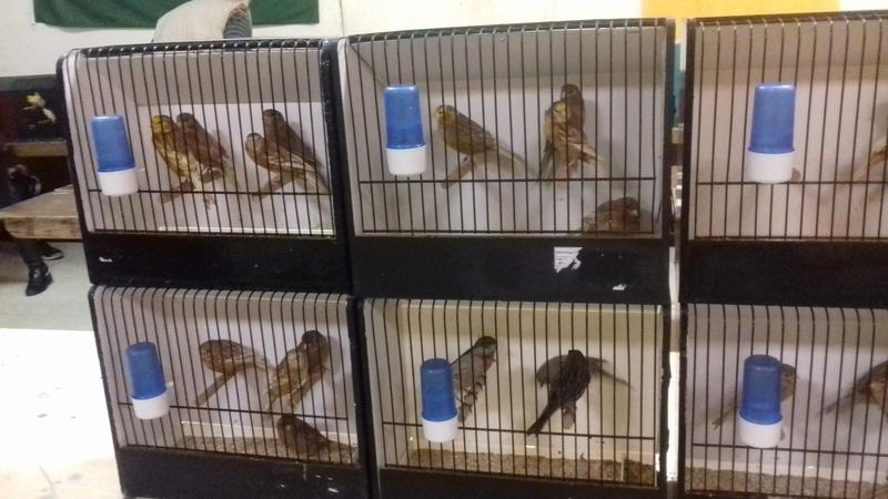 bourses d'oiseaux a flemalle - Page 2 20161177