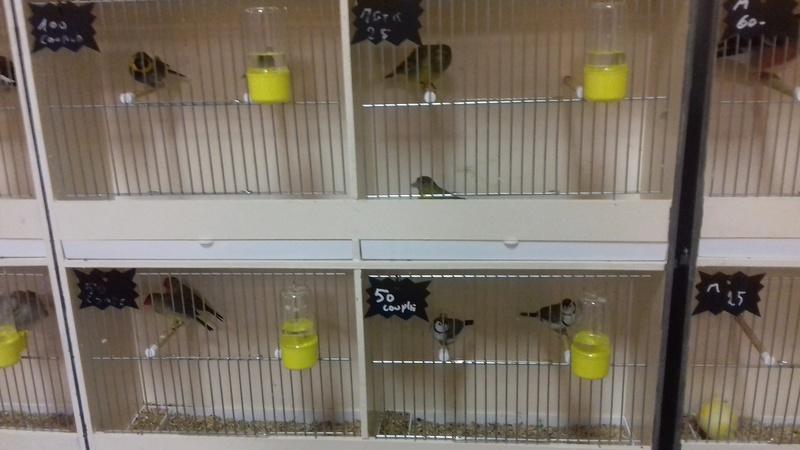 bourses d'oiseaux a flemalle - Page 2 20161178