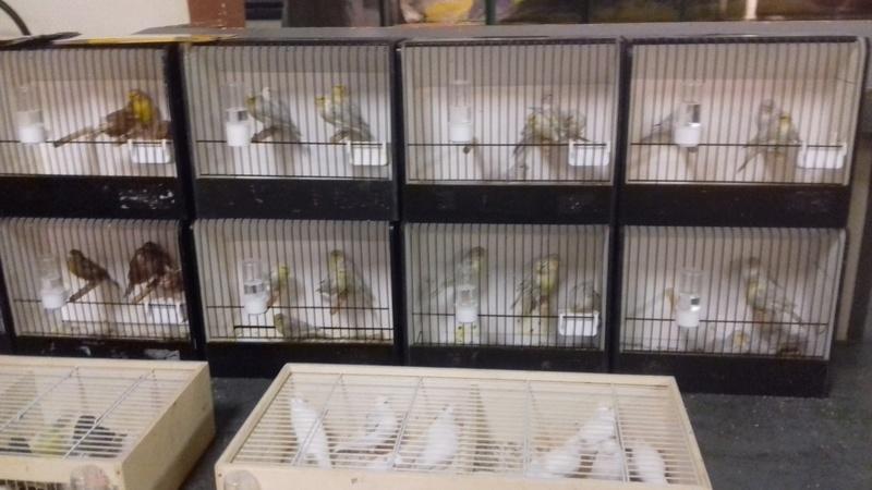bourses d'oiseaux a flemalle - Page 2 20161179