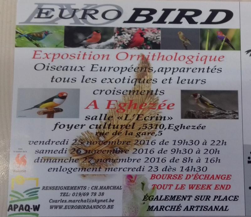 bourses d'oiseaux a flemalle - Page 2 20161184