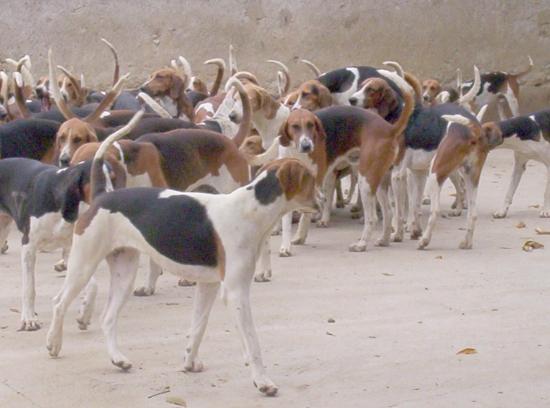Chasse aux sangliers sur les terres d'Andiran Chien-10