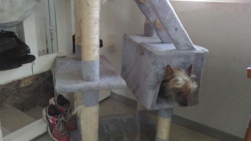Bella,5 ans,chien nu Fb_img19