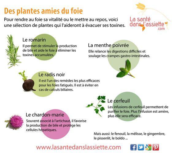 Les plantes qui soignent le foie Plante11