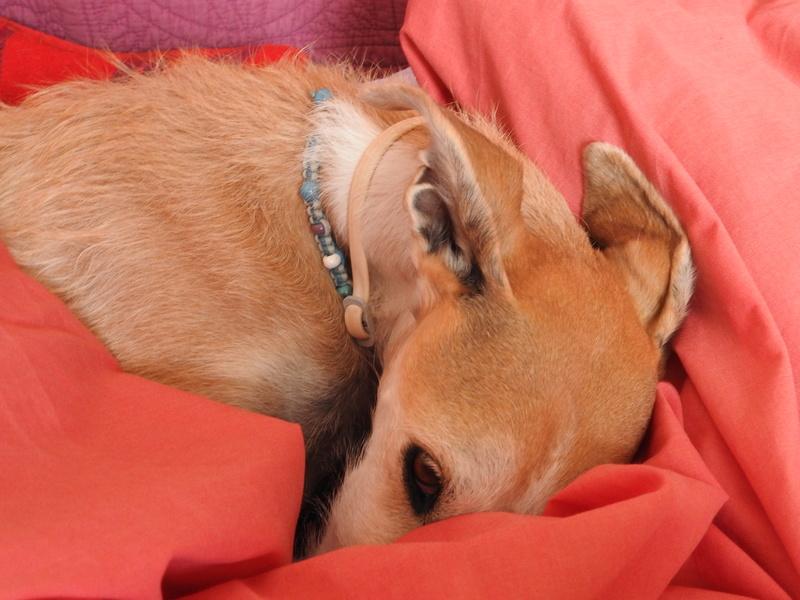 Barbas douce barbuda ,un coeur à prendre Scooby France/ Adoptée - Page 5 Dscn6016