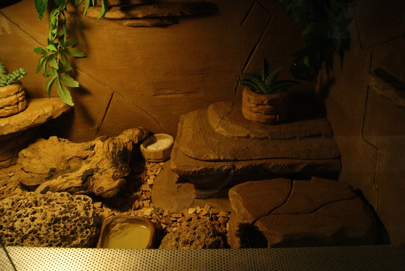 Le terra de mes geckos ! Dsc04415