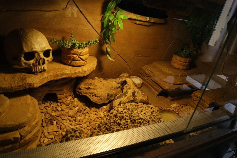 Le terra de mes geckos ! Dsc04416