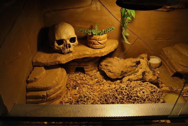 Le terra de mes geckos ! Dsc04417
