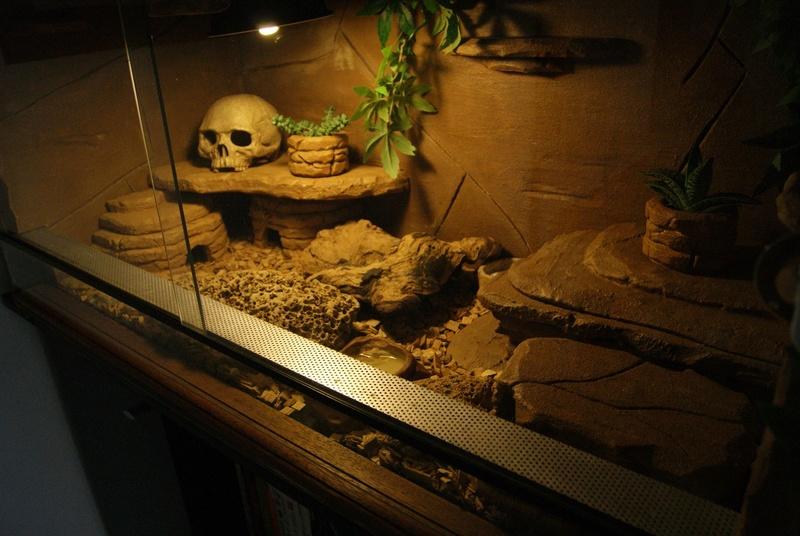 Le terra de mes geckos ! Dsc04418