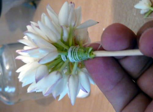 Comment faire un bouquet de jasmin...Etape par étape par moi même 0810