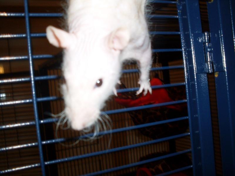 ratons - Page 3 Sdc11218