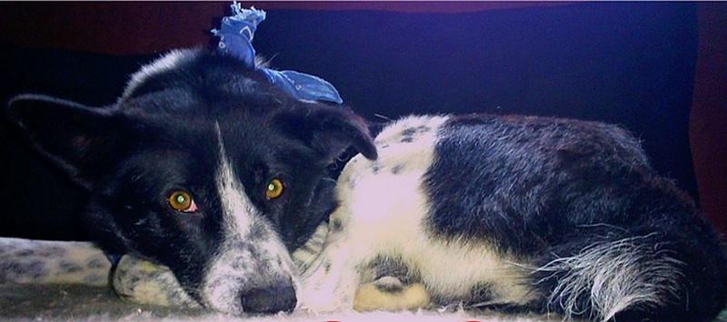 URGENT : Appel à l'aide et à la solidarité pour Yaëlle, adoptante de Minnie... Cobalt10