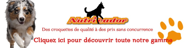 Dogs for rêveur Untitl10