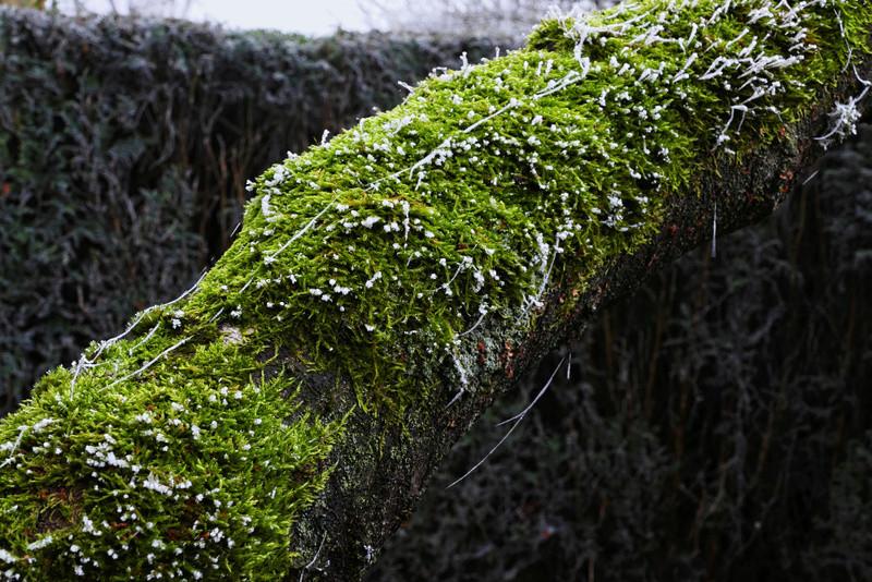 nature givré P1100513