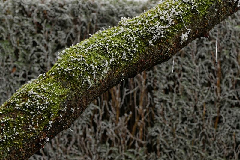 nature givré P1100514
