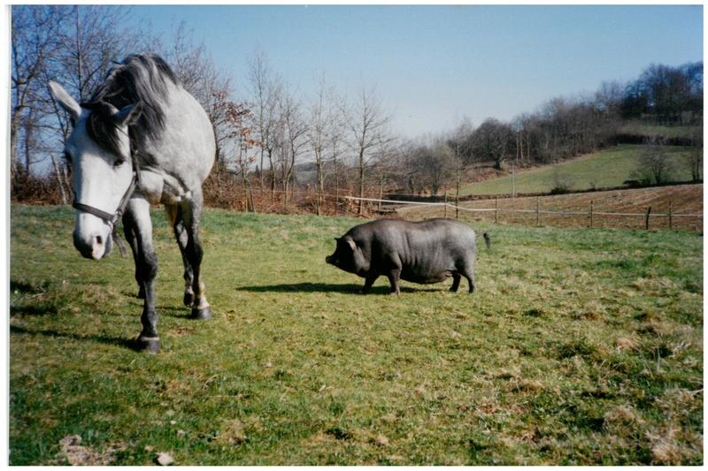 """Concours photos """"les compagnons de vos chevaux"""" gagnant Joël Skm_c210"""