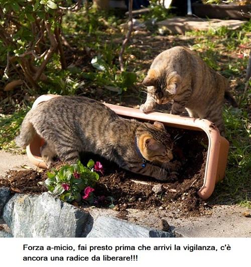 BAU and MIAO - Pagina 15 Miao10