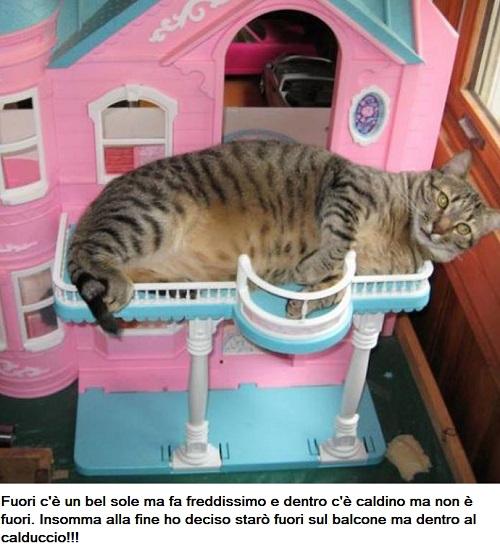 BAU and MIAO - Pagina 15 Miao12