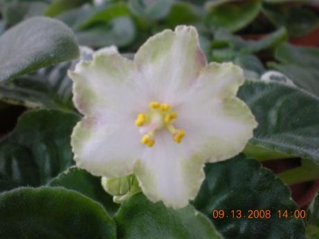 ma's lily pad Dscn1034
