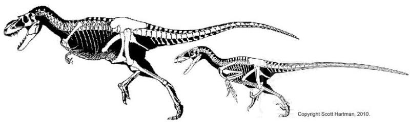 Albertosaurus vs Gastonia Size13