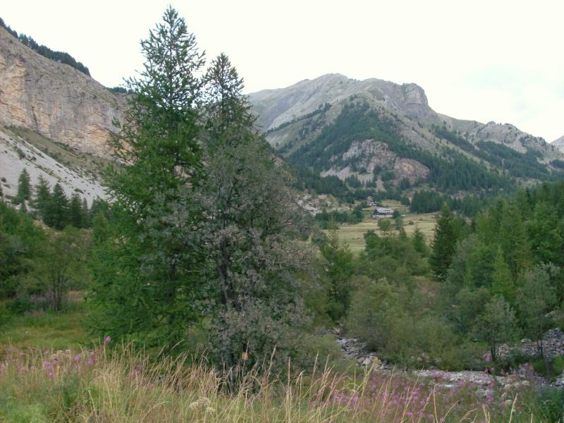 Escapade dans les Alpes du sud La_sou10
