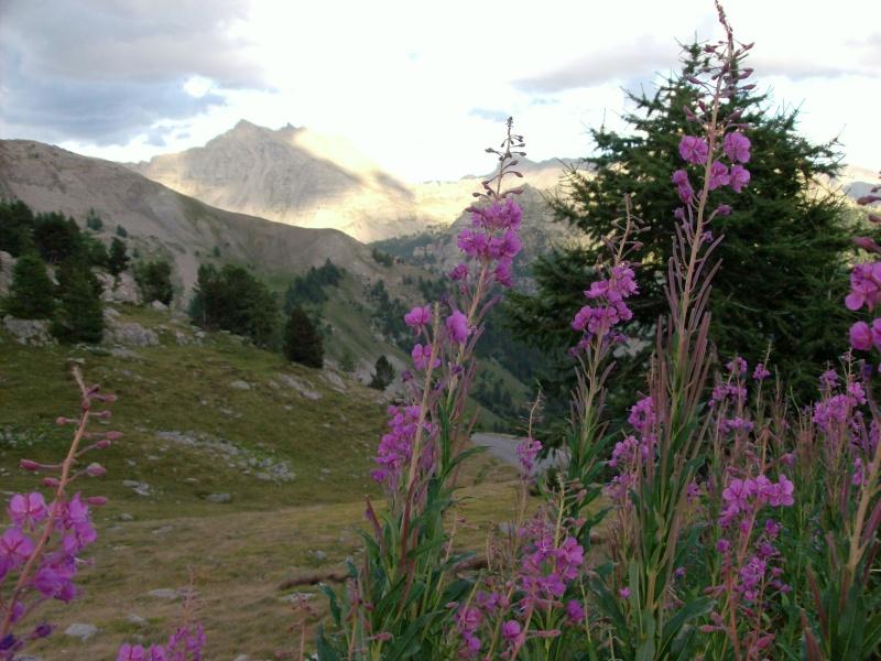Escapade dans les Alpes du sud Le_col15