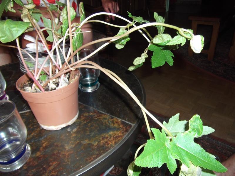 Ca vous dit quelque chose cette plante ? Photo_48