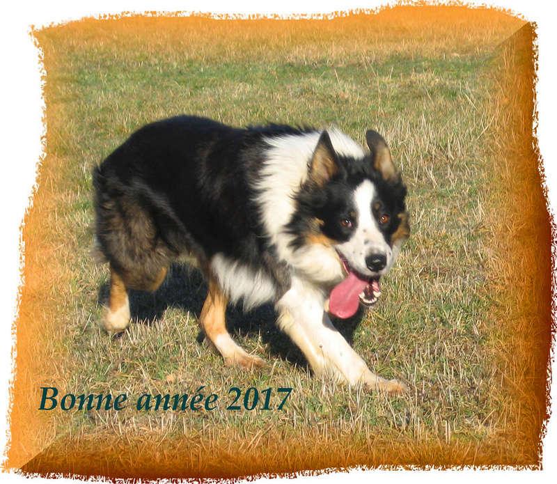 chien - présentation de JUSS, chien traumatisé  - Page 15 Sans_t10