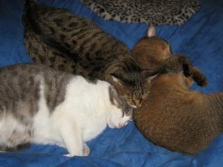 Perdu,trois chats Dept45 Img_5710
