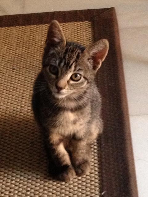 Lola, gatita de 7 meses Image10