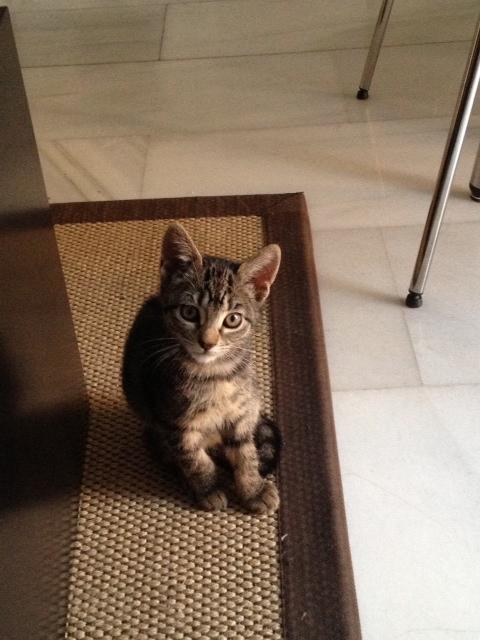 Lola, gatita de 7 meses Image11