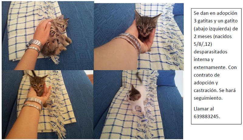 3 gatitas y 1 gatito Image131