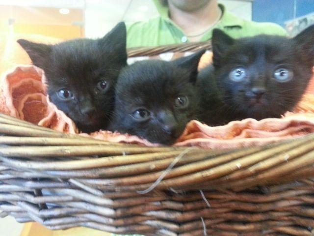 Gatitos encontrados en un contenedor Imagen41
