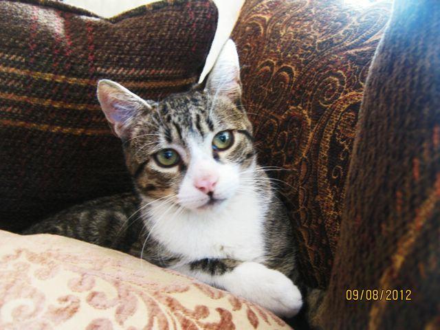 Precioso gato en adopción Imagen95