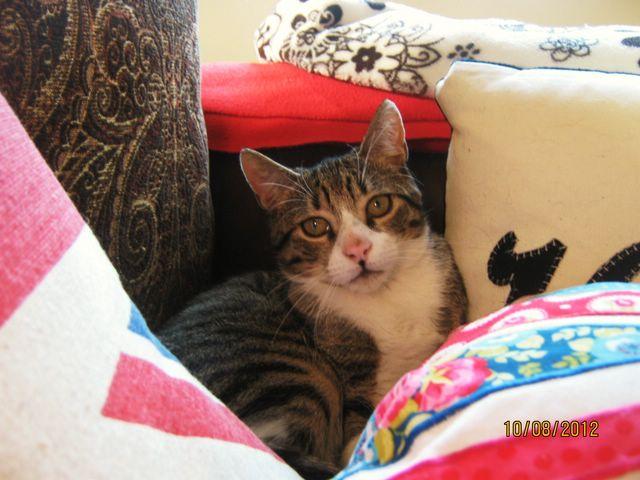 Precioso gato en adopción Imagen96