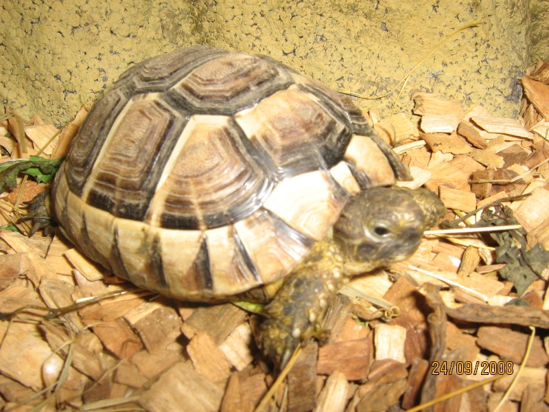 mes tortues...... Gusgus27