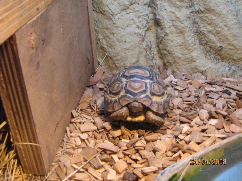 mes tortues...... Gusgus29