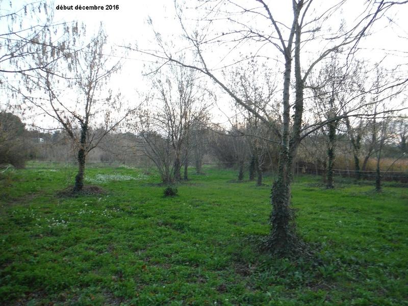 JdB de 4 hectares de pâtures dans le SUD : Avril 2019, et toujours la sécheresse... - Page 7 11005p10