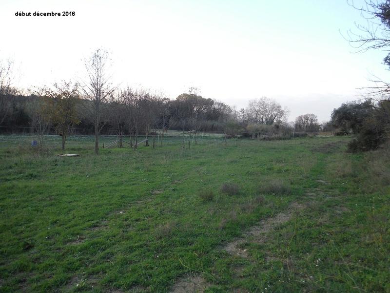 JdB de 4 hectares de pâtures dans le SUD : Avril 2019, et toujours la sécheresse... - Page 7 6005pa10