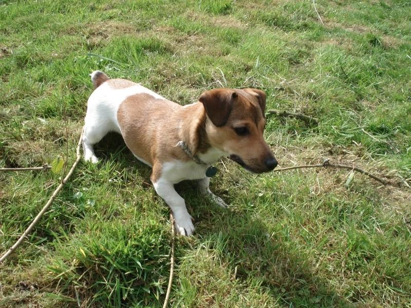 voici mon chien  Zezett11