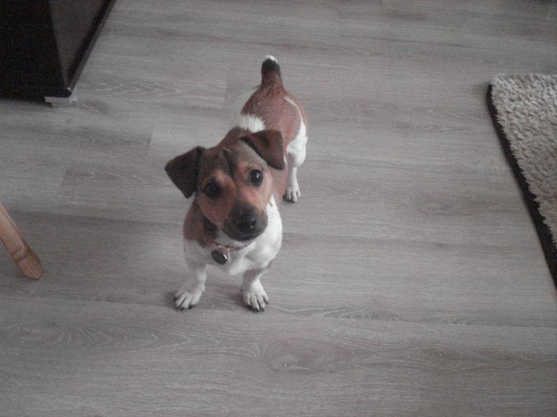 voici mon chien  Zezett13