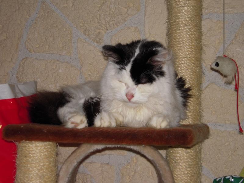 leucose: le traitement administré a mon jeune chat! Help les connaisseurs vp!! - Page 3 Photo_10