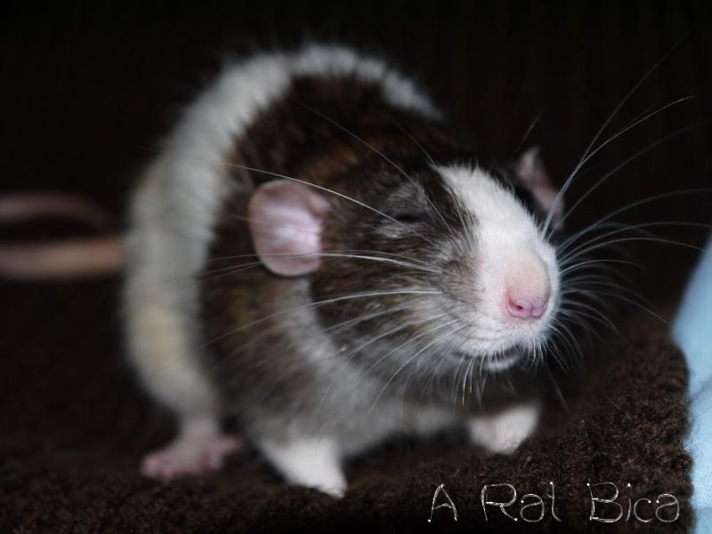 Sauvetage des 25 rats dans les Landes - Page 8 P1000816