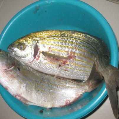 poisson de dellys frais 42189410