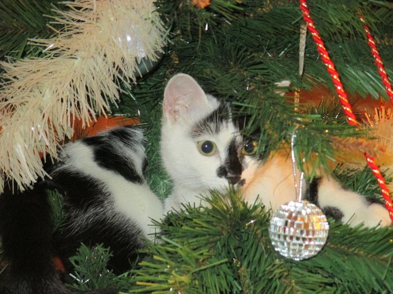 Roxy vous souhaite de joyeuses fêtes :-) II en images.... Img_2916