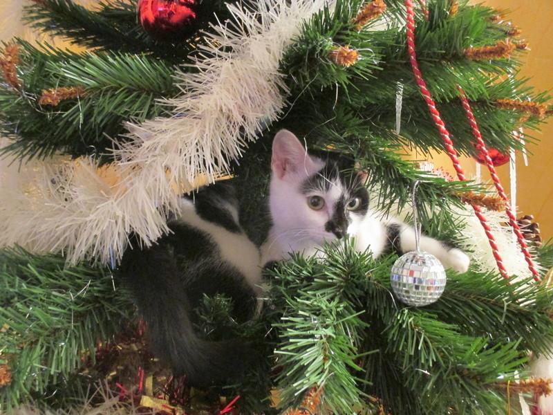 Roxy vous souhaite de joyeuses fêtes :-) II en images.... Img_2917