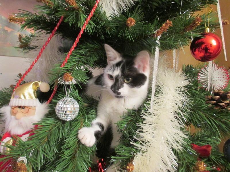 Roxy vous souhaite de joyeuses fêtes :-) II en images.... Img_2918