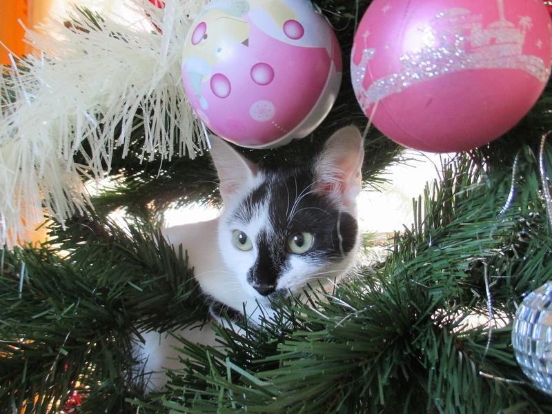 Roxy vous souhaite de joyeuses fêtes :-) II en images.... Img_2919
