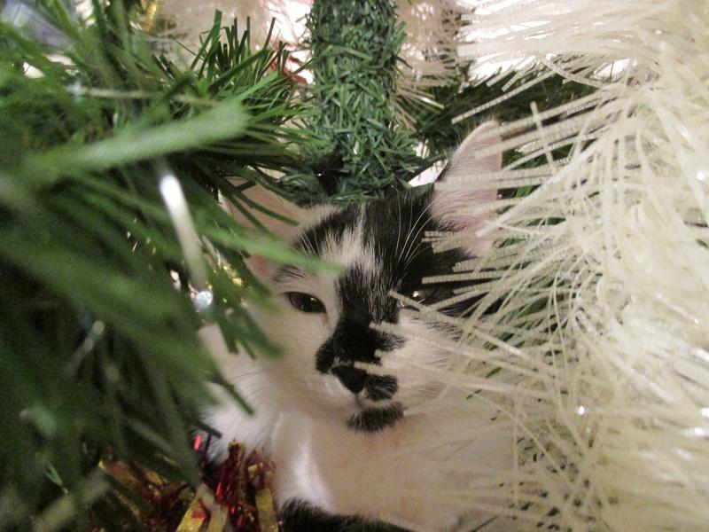 Roxy vous souhaite de joyeuses fêtes :-) II en images.... Img_2920