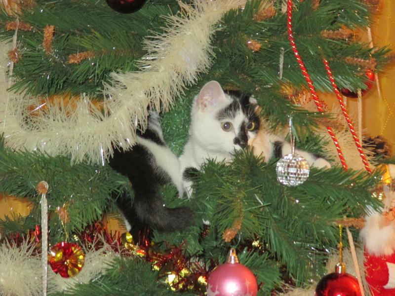 Roxy vous souhaite de joyeuses fêtes :-) II en images.... Img_2921